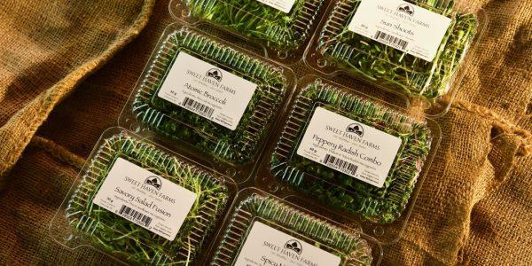 Microgreens – Sweet Haven Farms