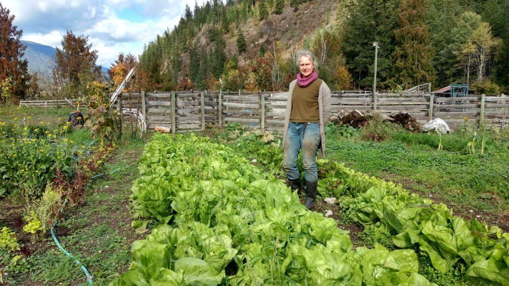 Cedarstein Farms co-owner, Heidi Lang, standing in a garden of lettuce.